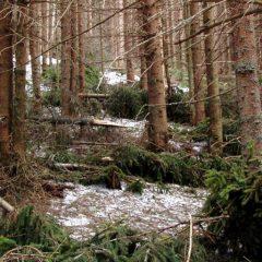 Schneebruch   BFW   Borkenkäfer   Internationaler Holzmarkt   (c) BFW