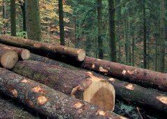Ein Plädoyer für mehr Holzbau © Rainer Sturm / pixelio.de