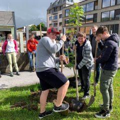 Gemeinsame Pflanzaktion stärkt den Zusammenhalt und die Schul-Gemeinschaft – die Esche bekam den Platz vor der Werkstättenhalle (Foto: Holztechnikum Kuchl)
